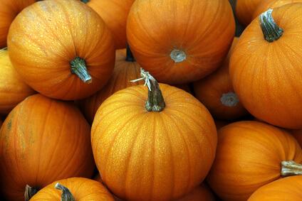 abundant October pumpkins
