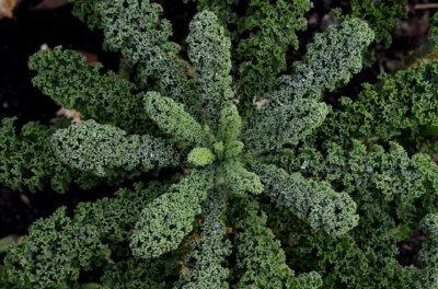 Kale Vitamin A