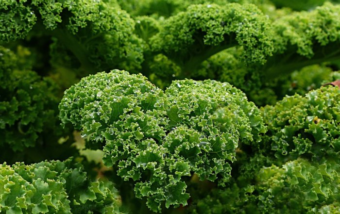 Kale was never tested by the USDA from 2009 to 2016.. But the pesticide levels in conventional kale skyrocketed.